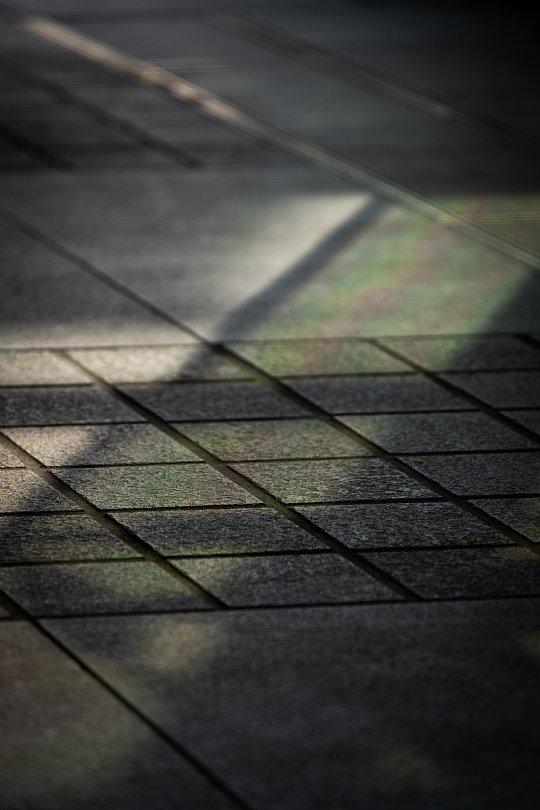 光蜥蜴が戯れる卯月のオフィスビル_d0353489_20331236.jpg