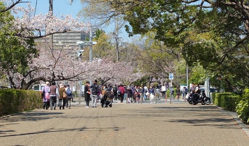 夙川の桜_b0212396_22042807.jpg