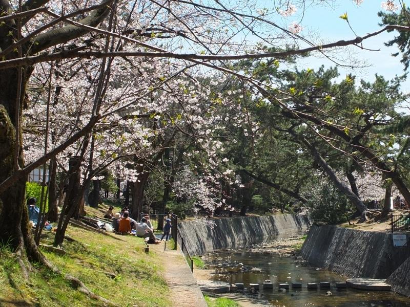 夙川の桜_b0212396_22072659.jpg