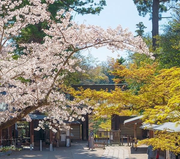 北鎌倉 円覚寺の桜_b0145398_23435043.jpg