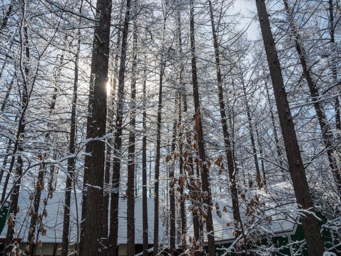 """4月ですが・・カラマツ林が雪化粧""""スノードロップ""""は開花。_f0276498_23074146.jpg"""
