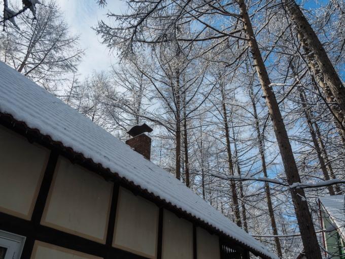 """4月ですが・・カラマツ林が雪化粧""""スノードロップ""""は開花。_f0276498_23084703.jpg"""