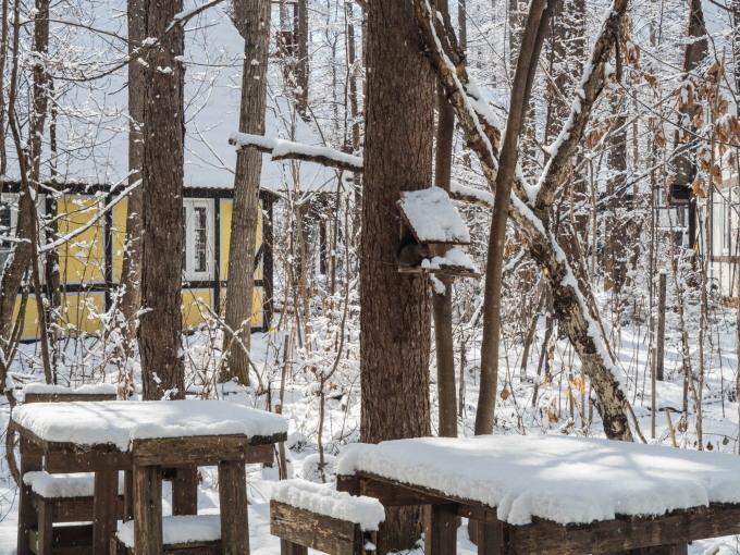 """4月ですが・・カラマツ林が雪化粧""""スノードロップ""""は開花。_f0276498_23101531.jpg"""