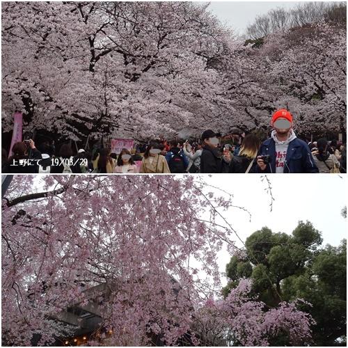 三月のお花見_c0051105_20532265.jpg