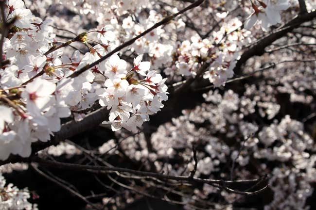 平安神宮大鳥居と疎水・インクラインあたり_e0048413_21352034.jpg