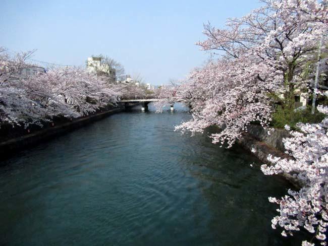 平安神宮大鳥居と疎水・インクラインあたり_e0048413_21354910.jpg