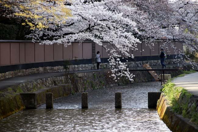 平安神宮大鳥居と疎水・インクラインあたり_e0048413_21355721.jpg