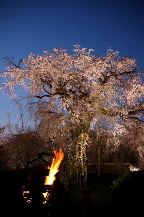 夜桜満喫 円山公園_e0048413_22320890.jpg