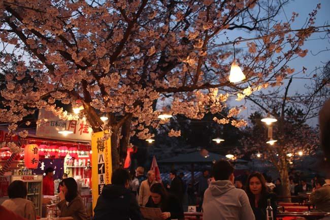 夜桜満喫 円山公園_e0048413_22321476.jpg