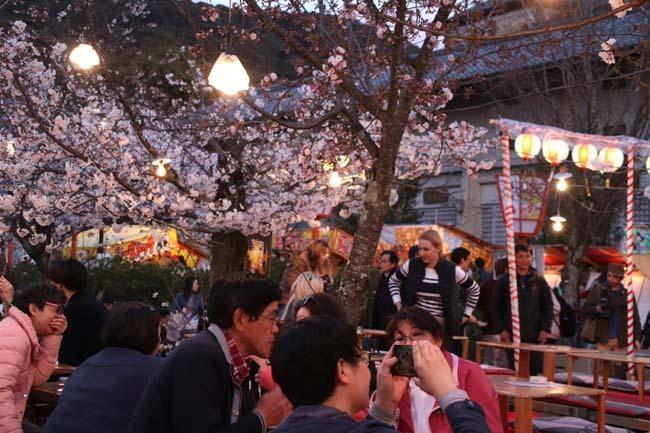 夜桜満喫 円山公園_e0048413_22321735.jpg