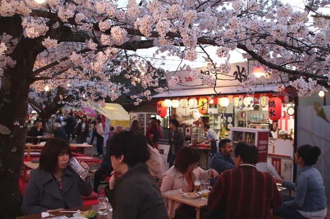夜桜満喫 円山公園_e0048413_22322021.jpg