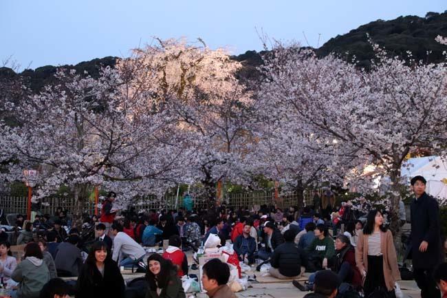 夜桜満喫 円山公園_e0048413_22322330.jpg