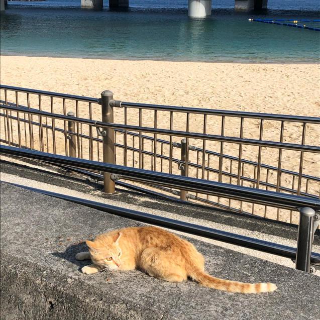 沖縄で朝活☆夏気分を先取りしました_d0285416_16190081.jpg
