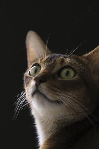[猫的]ブラックシリーズ_e0090124_00024951.jpg