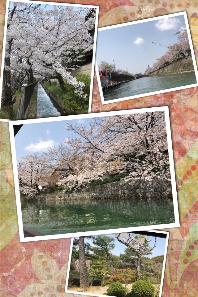 京都お花見・・・🌸_f0177125_21350730.jpeg
