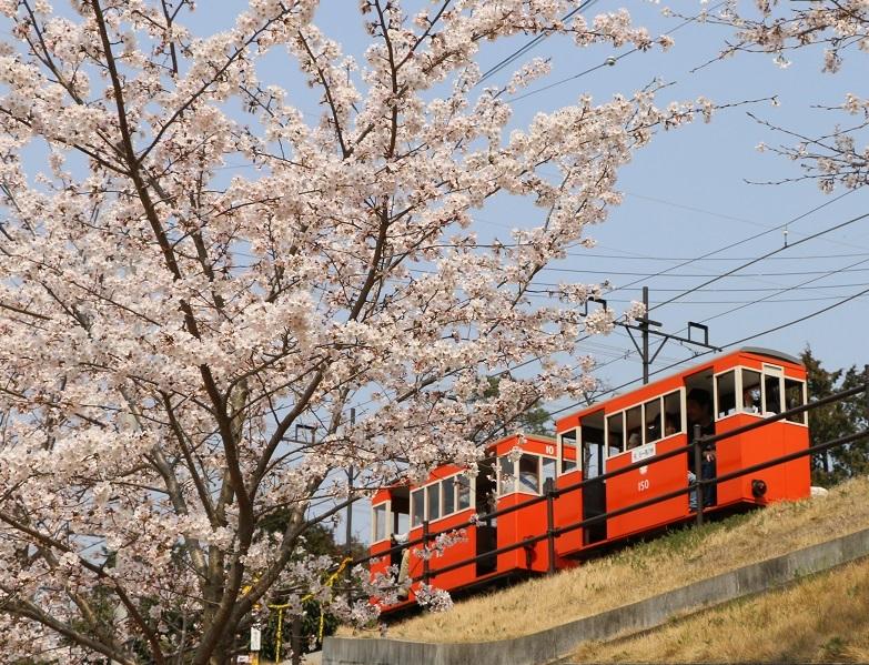 桜咲く 桜谷軽便鉄道_a0066027_19135790.jpg