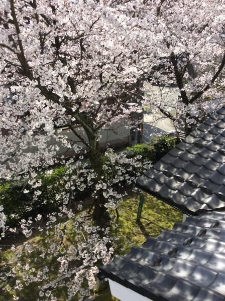 """""""花""""&「芭蕉の館」_f0289632_06523033.jpg"""