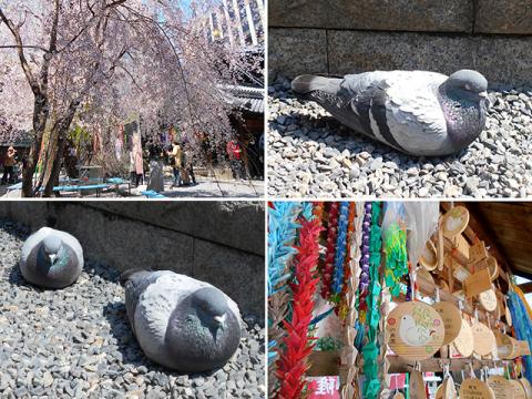 京都・桜めぐり1(4月4日 木 2019年)_a0099744_15084112.jpg
