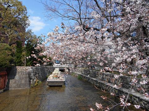 京都・桜めぐり1(4月4日 木 2019年)_a0099744_15091605.jpg