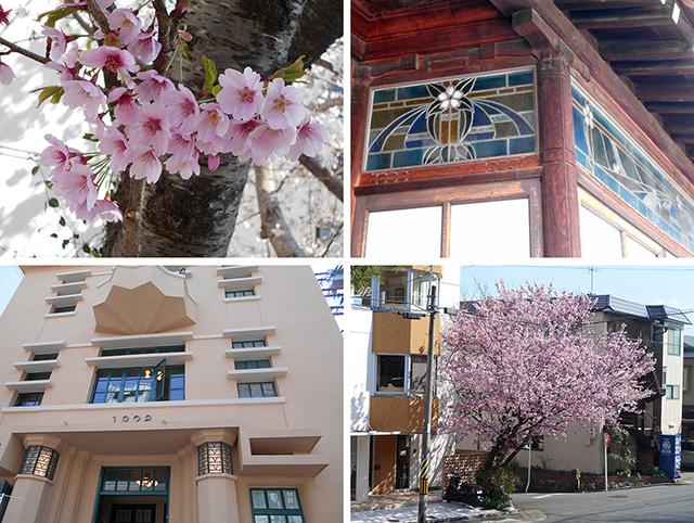 京都・桜めぐり1(4月4日 木 2019年)_a0099744_15092297.jpg