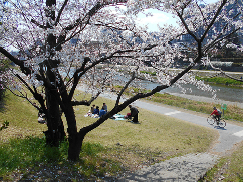 京都・桜めぐり1(4月4日 木 2019年)_a0099744_15092891.jpg