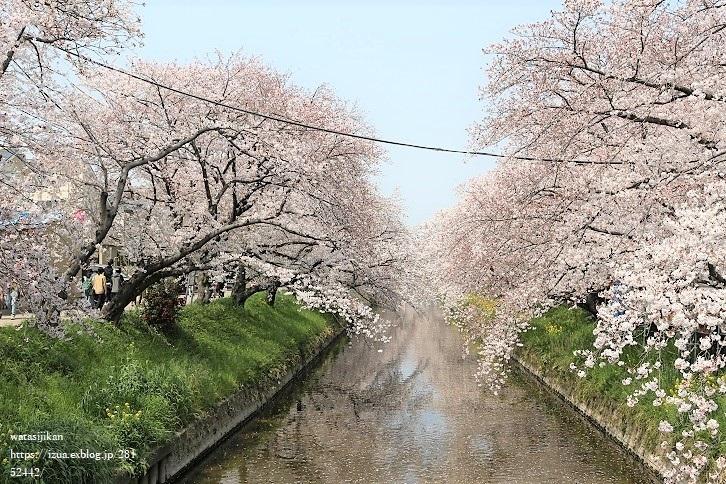 五条川の桜祭りに行く_e0214646_20331130.jpg