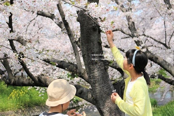 五条川の桜祭りに行く_e0214646_20331910.jpg
