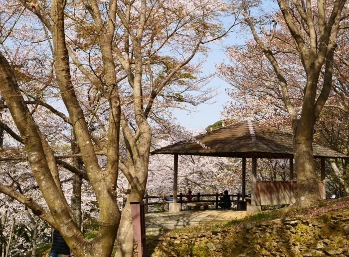 春爛漫の紀伊風土記の丘 2  2019-04-10 00:00   _b0093754_21580720.jpg