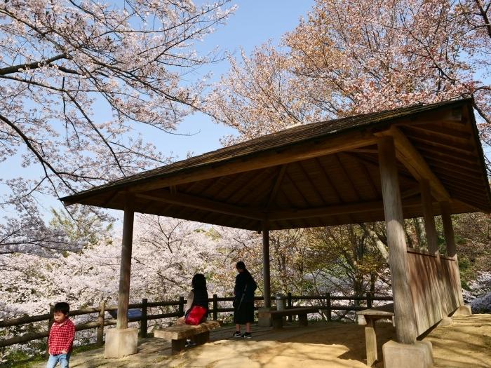 春爛漫の紀伊風土記の丘 2  2019-04-10 00:00   _b0093754_21581897.jpg