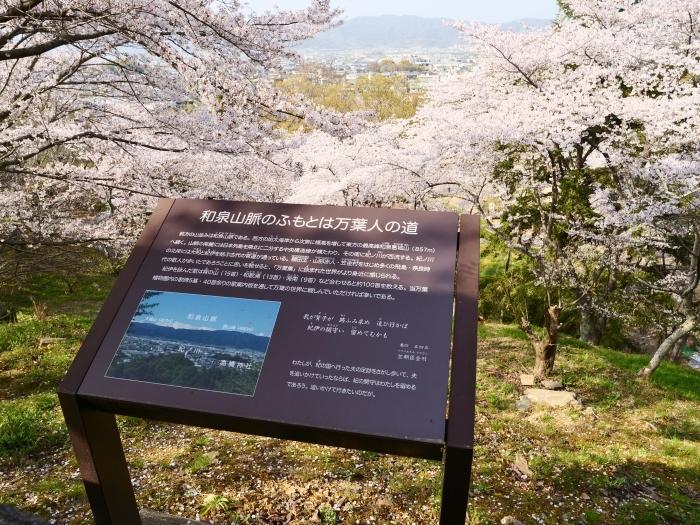 春爛漫の紀伊風土記の丘 2  2019-04-10 00:00   _b0093754_21584007.jpg