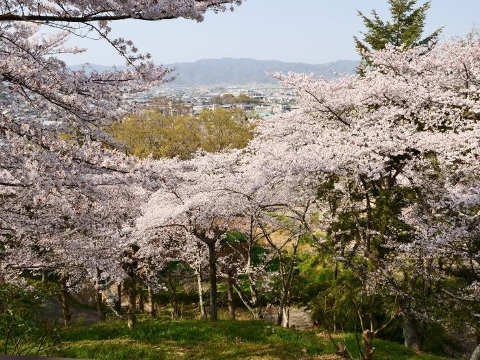 春爛漫の紀伊風土記の丘 2  2019-04-10 00:00   _b0093754_21585618.jpg