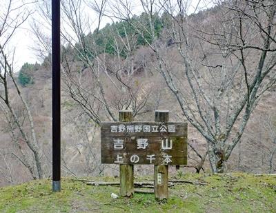 吉野山の桜開花情報♪_b0194861_10413419.jpg