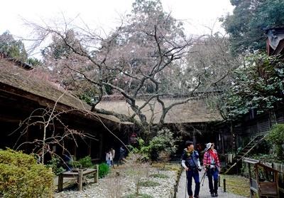 吉野山の桜開花情報♪_b0194861_10462634.jpg