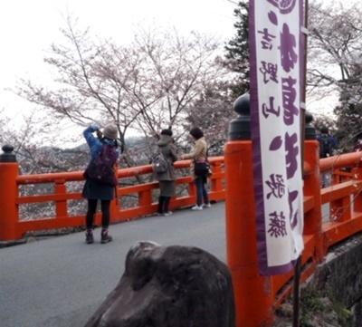 吉野山の桜開花情報♪_b0194861_11462207.jpg