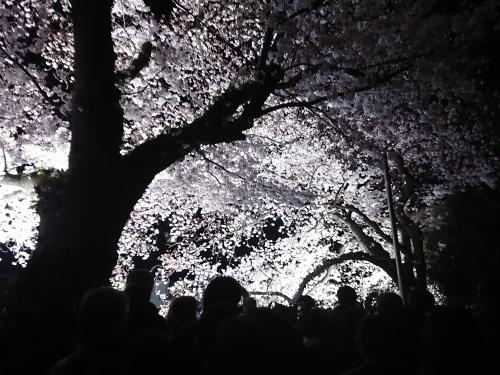 野川に桜のライトアップを見に行ってきた!_c0100865_11045253.jpg