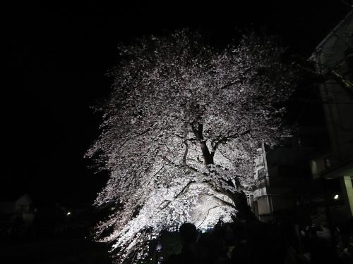 野川に桜のライトアップを見に行ってきた!_c0100865_11104216.jpg