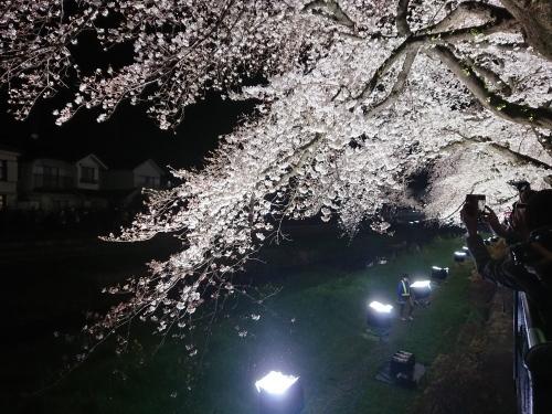 野川に桜のライトアップを見に行ってきた!_c0100865_11110871.jpg