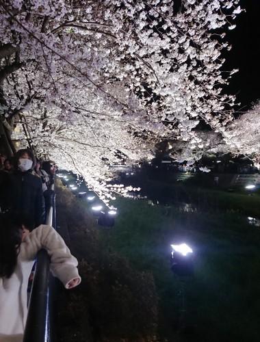 野川に桜のライトアップを見に行ってきた!_c0100865_11165584.jpg