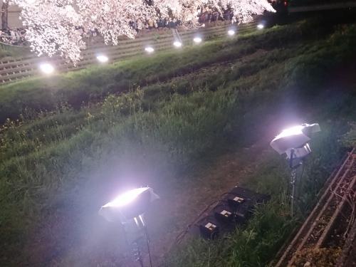 野川に桜のライトアップを見に行ってきた!_c0100865_11225041.jpg