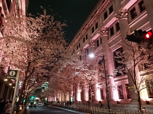 日本橋でピンクの桜のライトアップ♪_c0100865_11503638.jpg