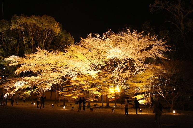 4月6日 東寺の桜は見頃です_a0023466_09025715.jpg