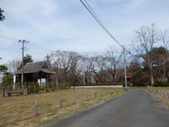 勝手に桜ツアー ご近所編_e0355177_13431783.jpg