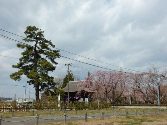 勝手に桜ツアー ご近所編_e0355177_13435118.jpg