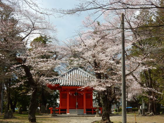 勝手に桜ツアー ご近所編_e0355177_13452010.jpg