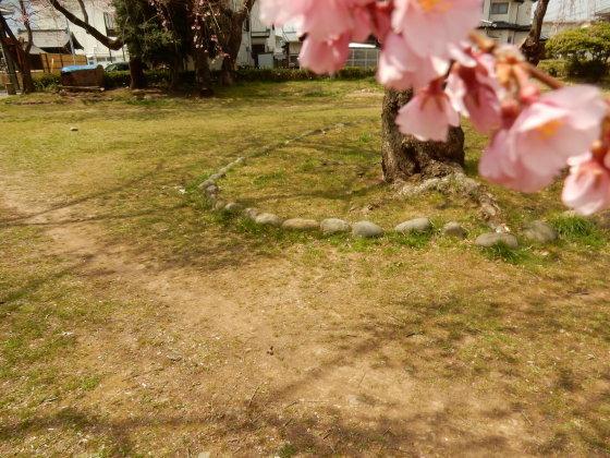 勝手に桜ツアー ご近所編_e0355177_13460572.jpg