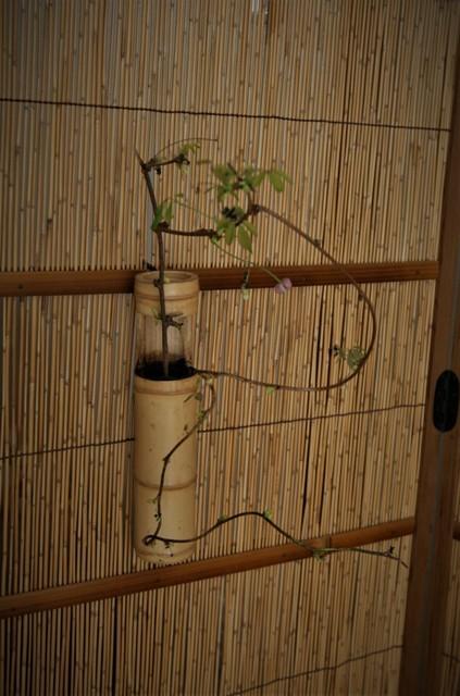 お茶室に「透木釜」が・・♬_f0229190_20272197.jpg