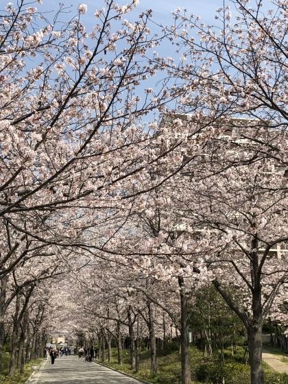 サクラの花見ですが_b0393392_20373526.jpeg