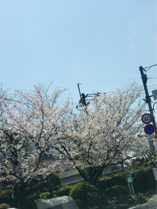 4月6日(土) 学園通り。_c0037794_23301972.jpg