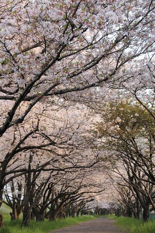 お花見散歩_a0333195_13203141.jpg