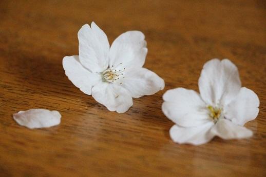 お花見散歩_a0333195_13420729.jpg